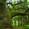 Le foreste più belle d'Europa